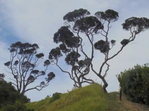jimbo trees